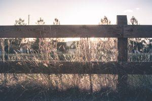 opsætning af hegn